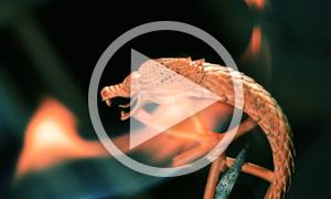 Proceso de creación de una joya Círculos de Fuego de Carrera y Carrera - Vídeo